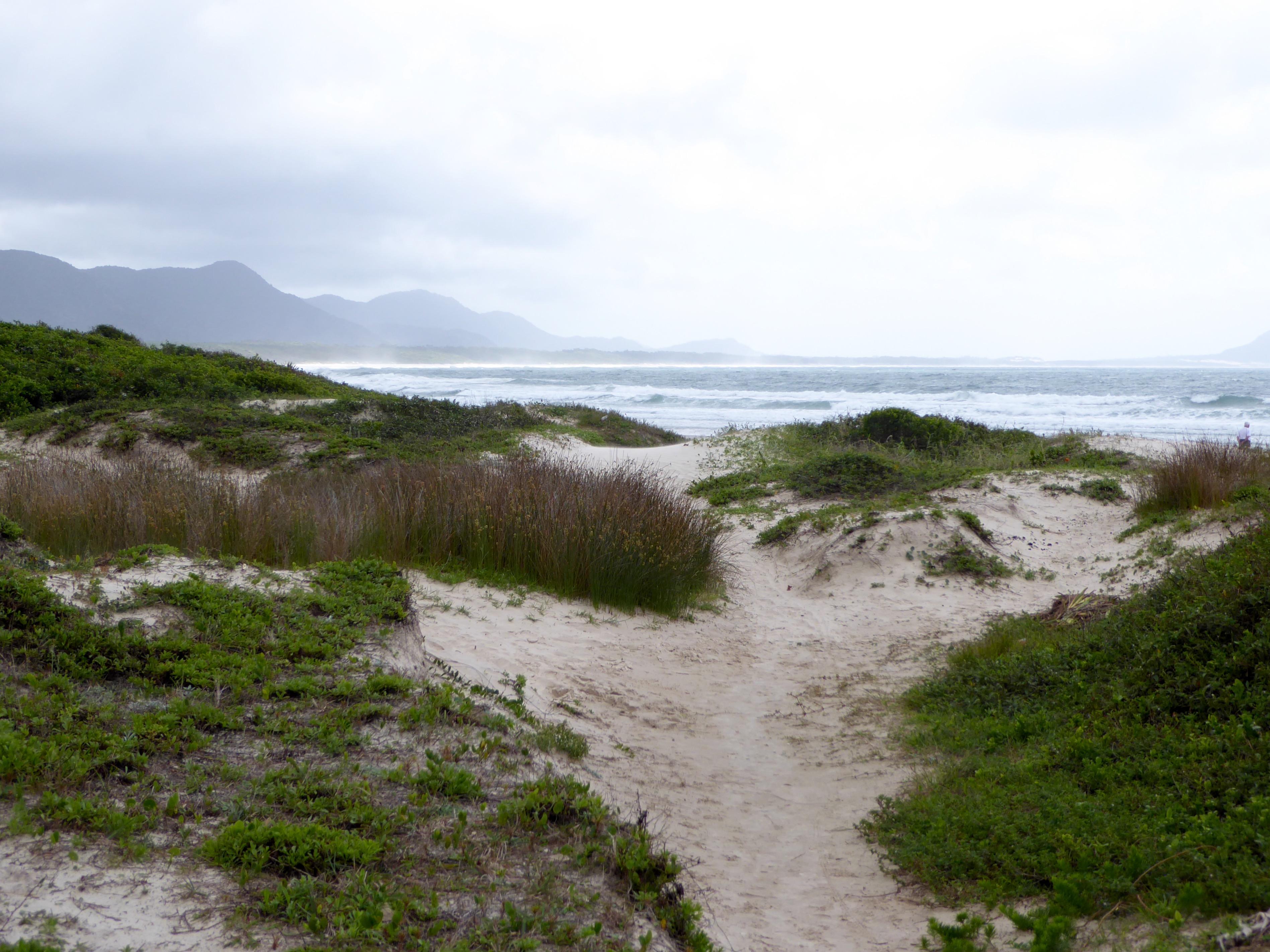 Den ene brasilianske strand.