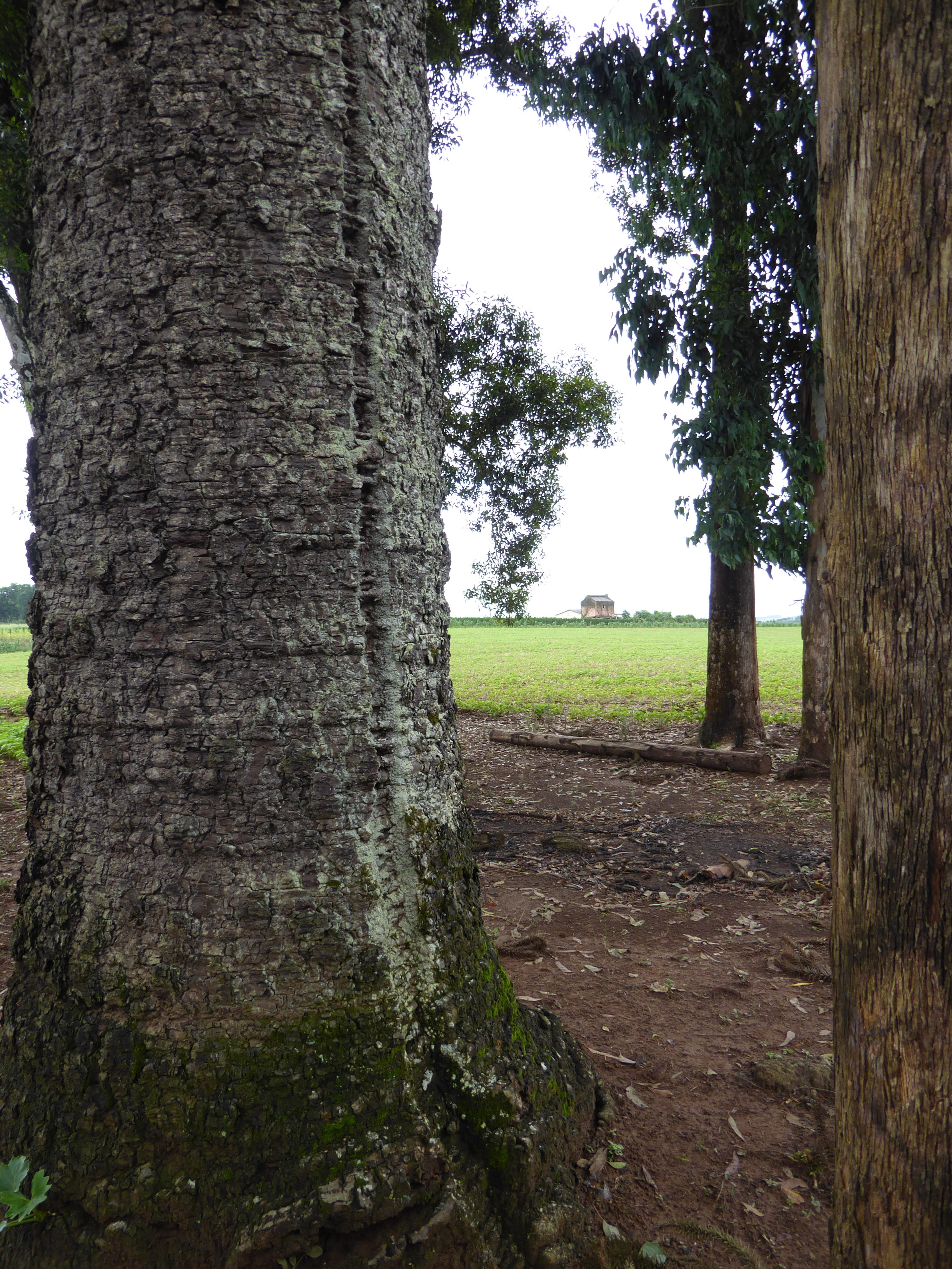 Træet med lyn-ar