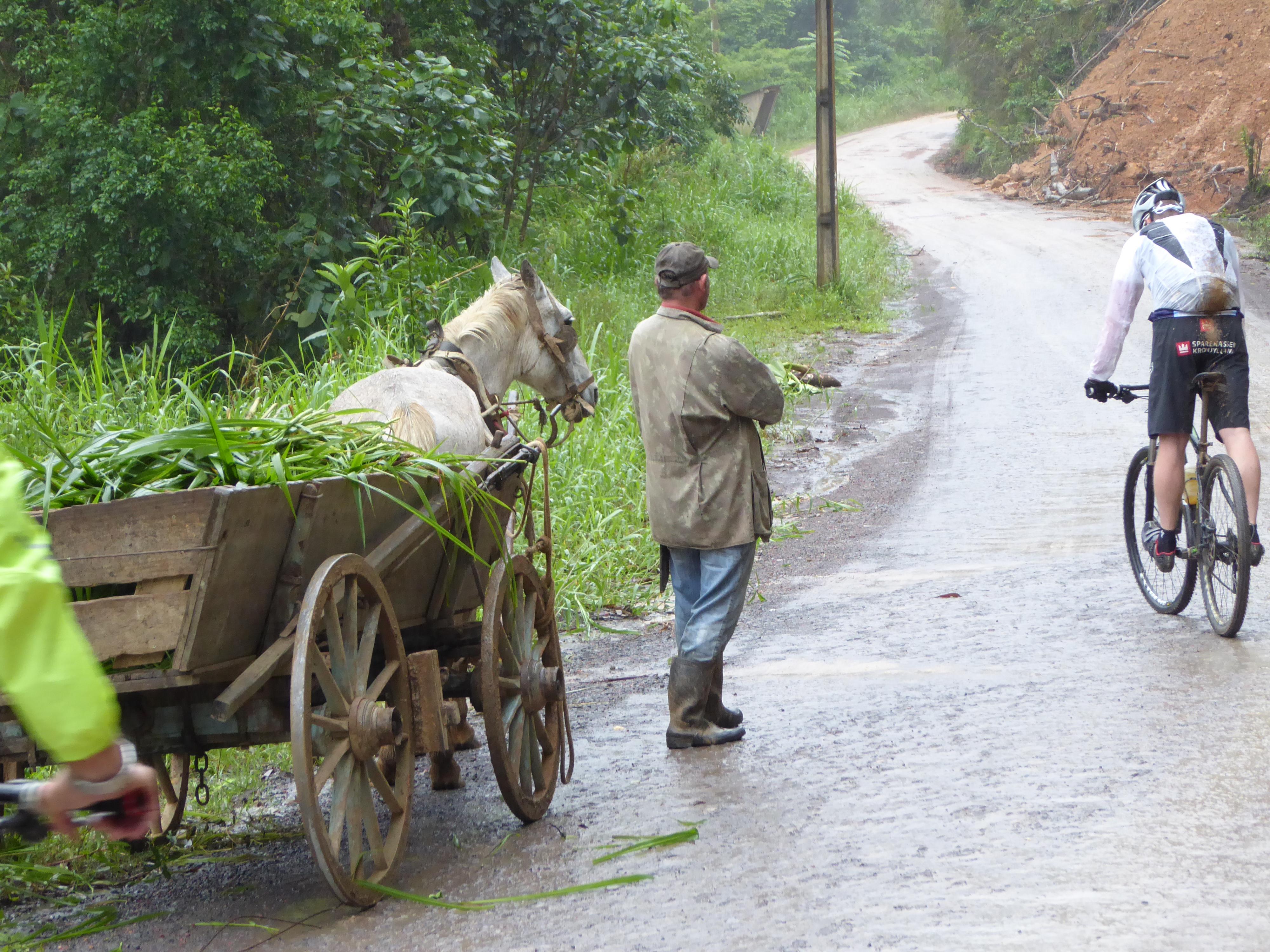 mand med hest og vogn.