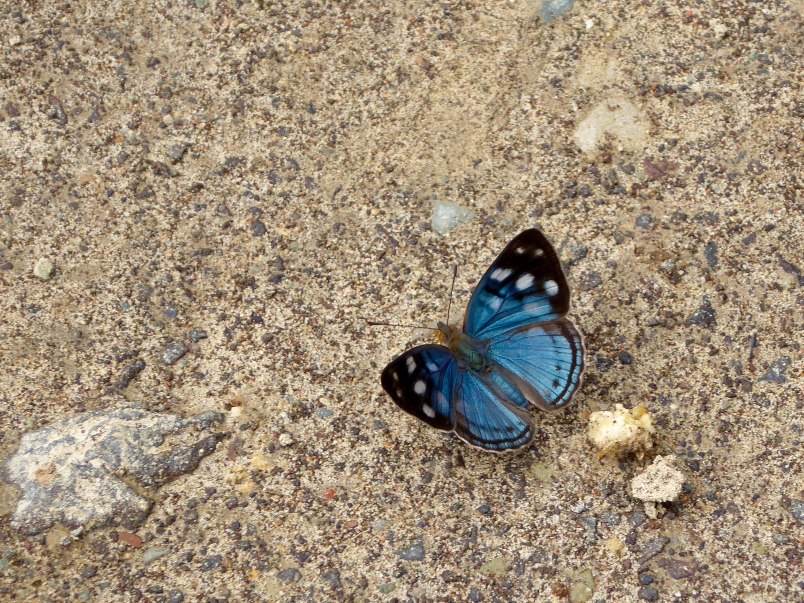 Lille sommerfugl.