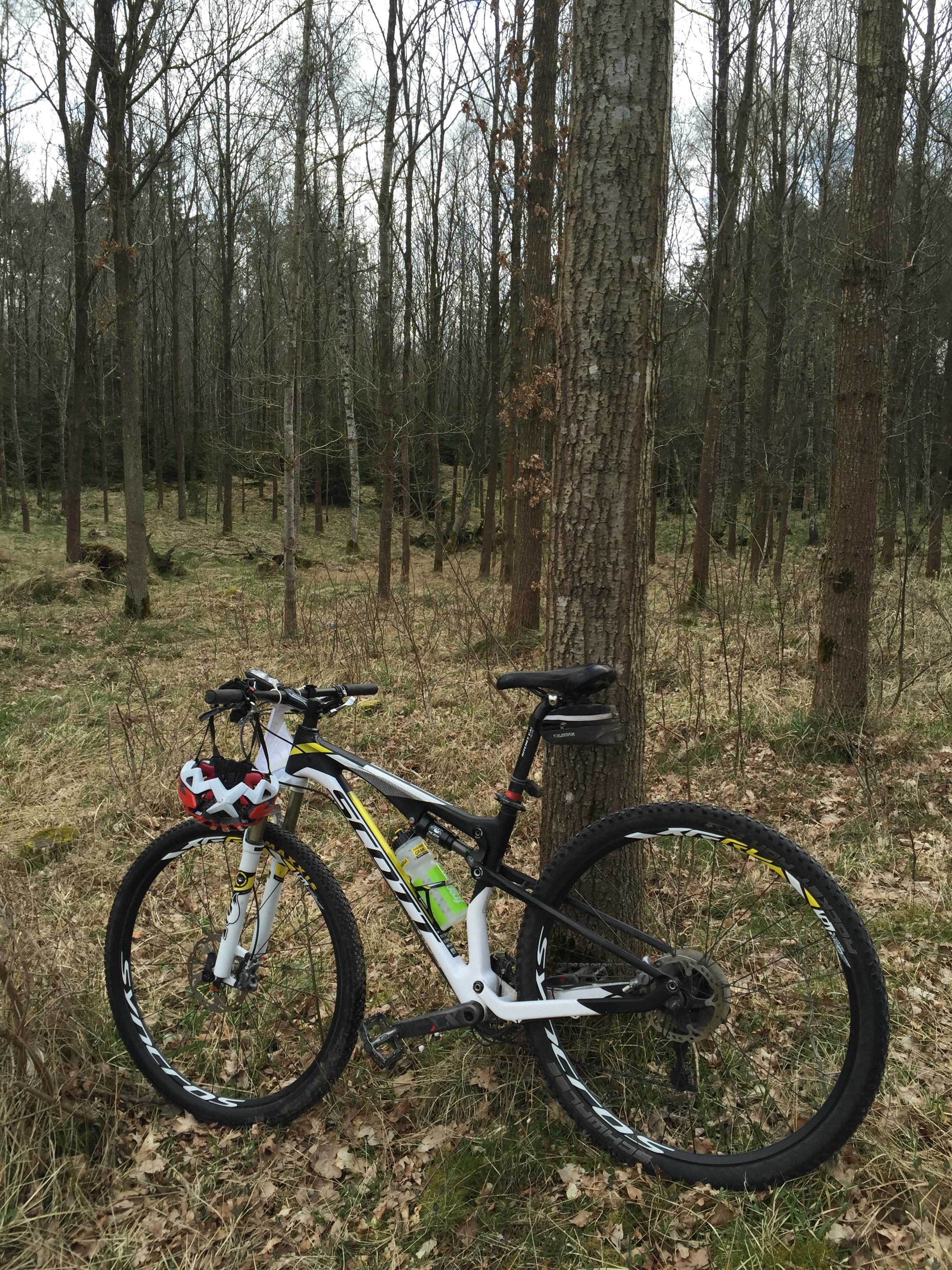 Min kække Scottsmate er klar til race i den endnu ikke udsprungne Grib Skov.